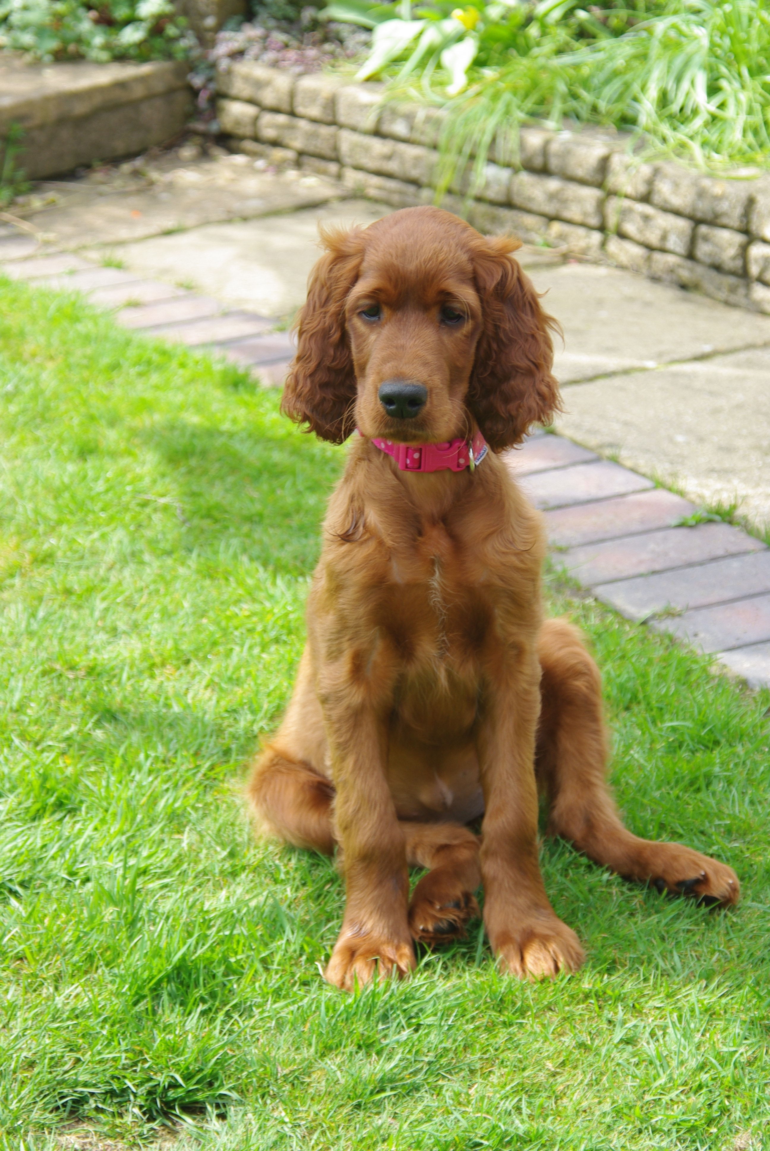 Willow 11 weeks