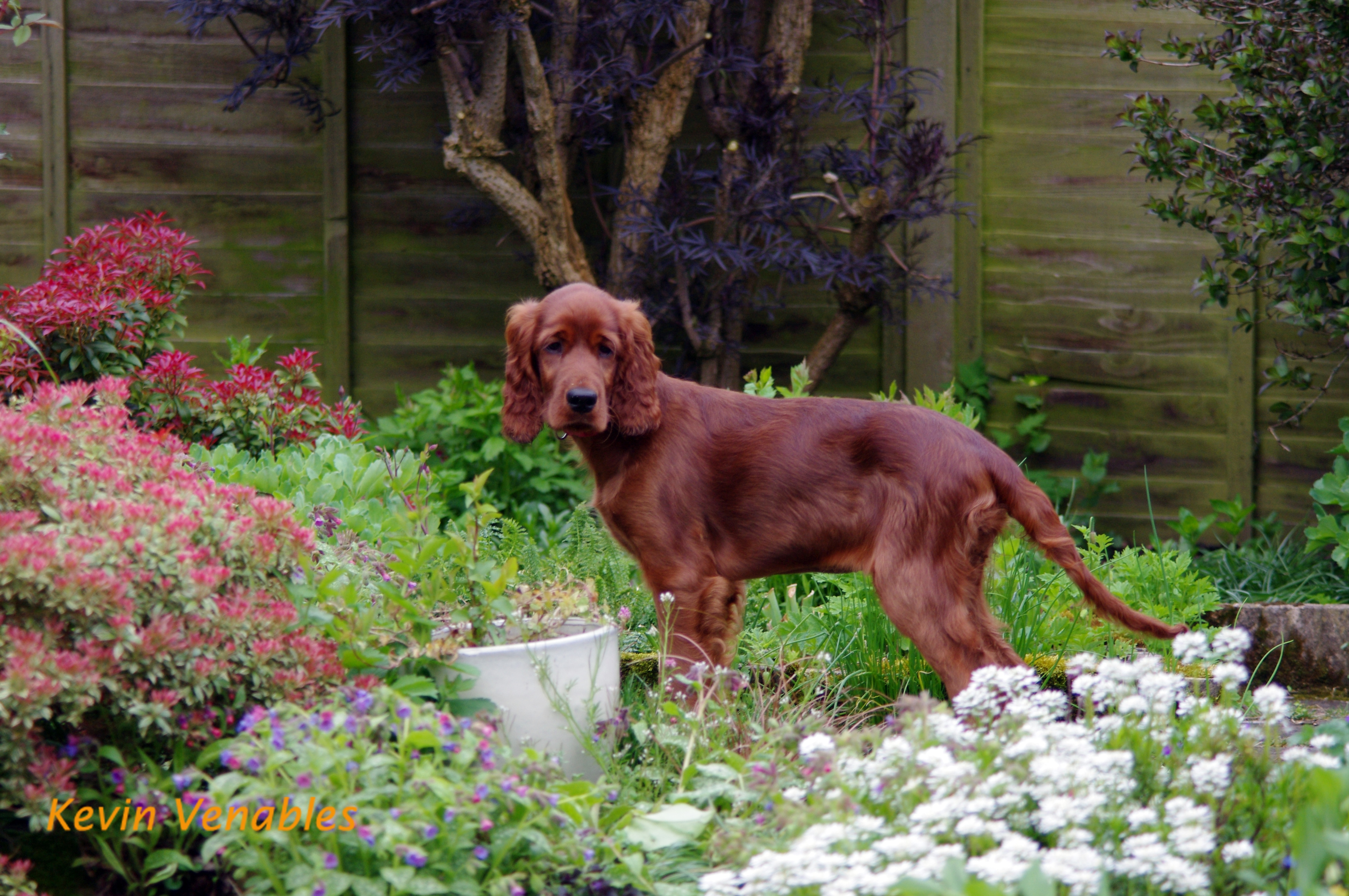Willow 13 weeks