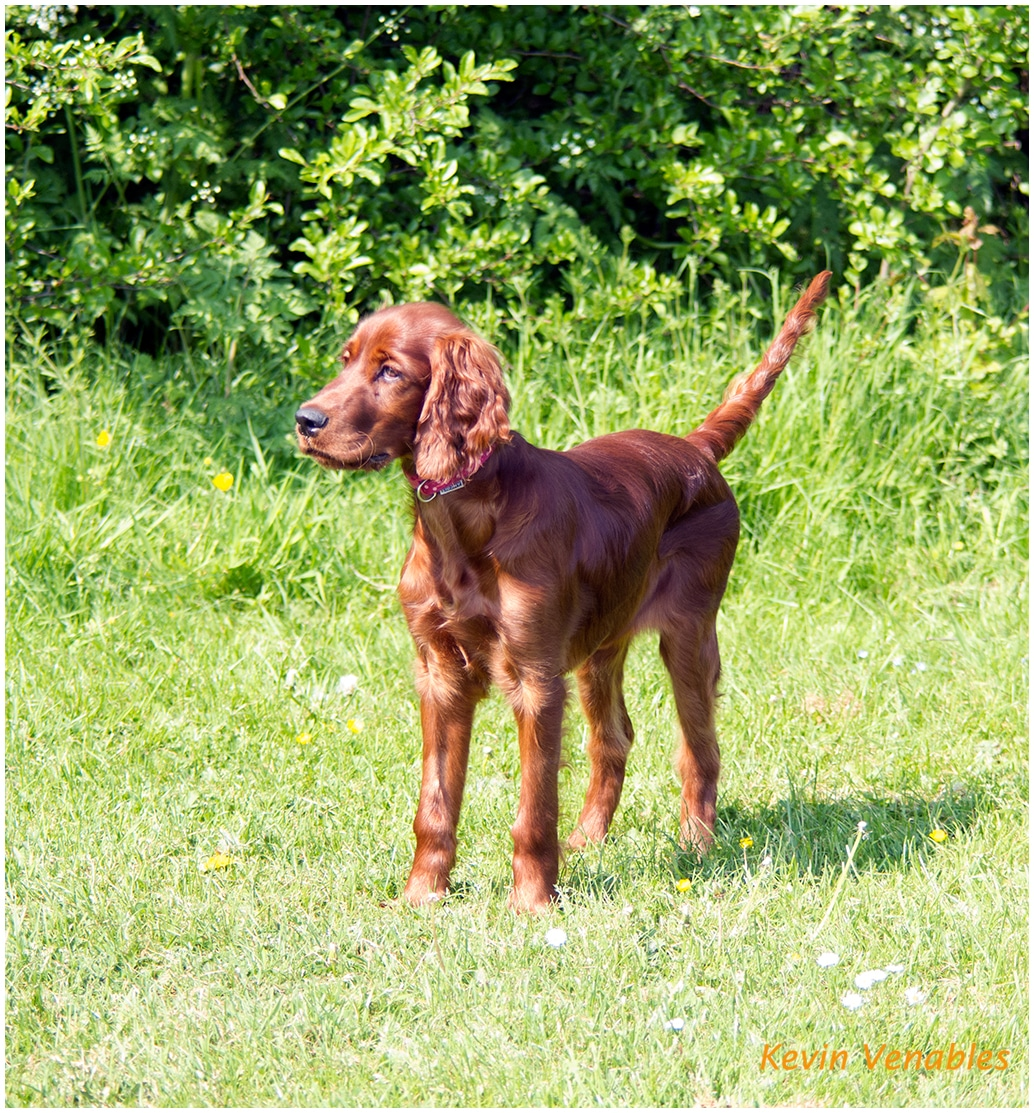 Willow 12 weeks